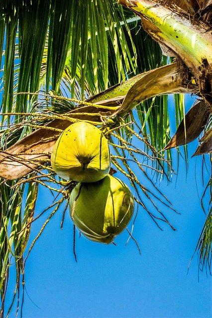 Coconuts for skincare