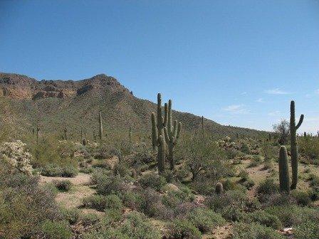 Desert Dry Skin