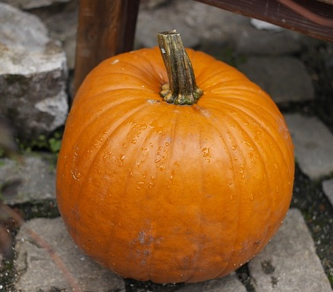 Popular skin care ingredient-Pumpkin